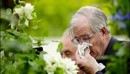 Viêm mũi dị ứng ở người già 1