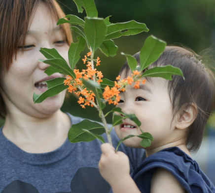 Nguyên nhân viêm mũi dị ứng ở trẻ em 1