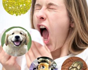 Bị viêm mũi dị ứng uống Xoang Bách Phục có hiệu quả không?
